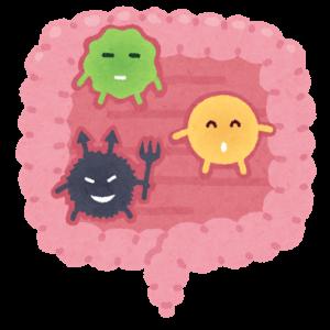腸内環境のイメージ
