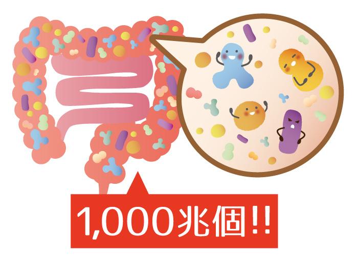 腸内に1,000兆個もの細菌がいるイメージ