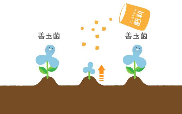 善玉菌が生えている花畑に、肥料を撒くのが「プレバイオティクス」