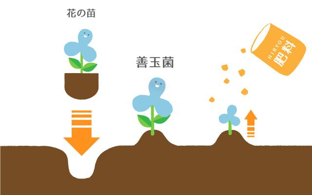 花の苗を植える「プロバイオティクス」と、肥料を撒く「プレバイオティクス」を組み合わせる「シンバイオティクス」