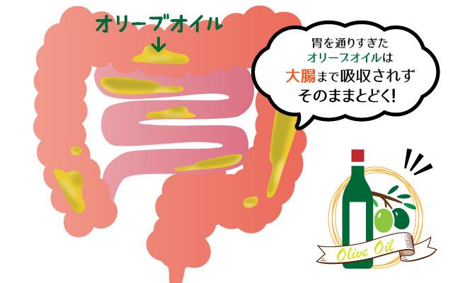 胃を通り過ぎたオリーブオイルは大腸まで吸収されずそのままとどく!を説明したイラスト