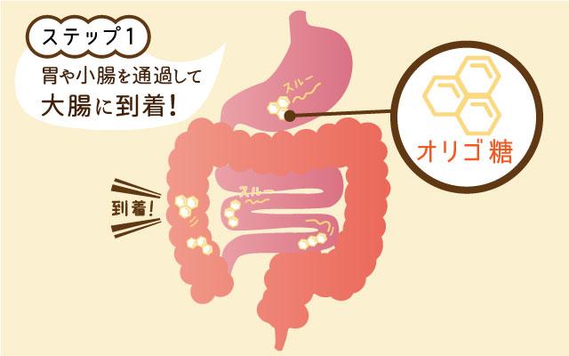 ステップ1:オリゴ糖が胃や小腸を通過大腸に到着するイラスト