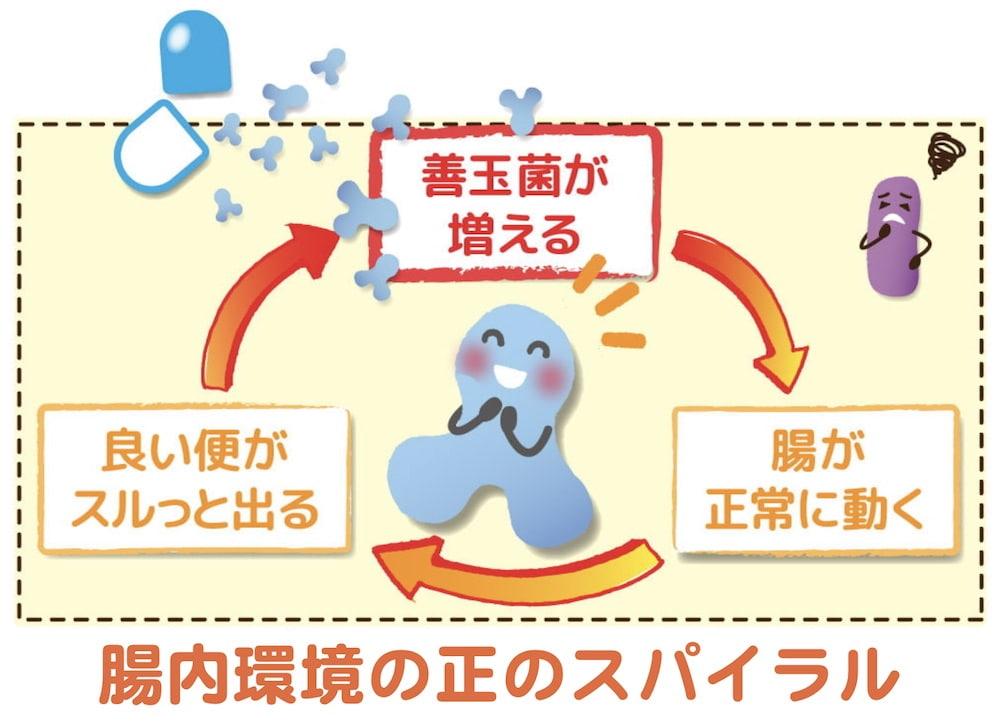 腸内環境の正のスパイラルのイラスト。善玉菌が増える→いい便がスルッと出る→腸が正常に動く